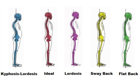 spine-alignments